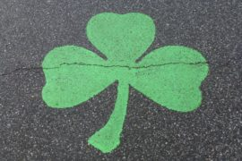 Clover on concrete